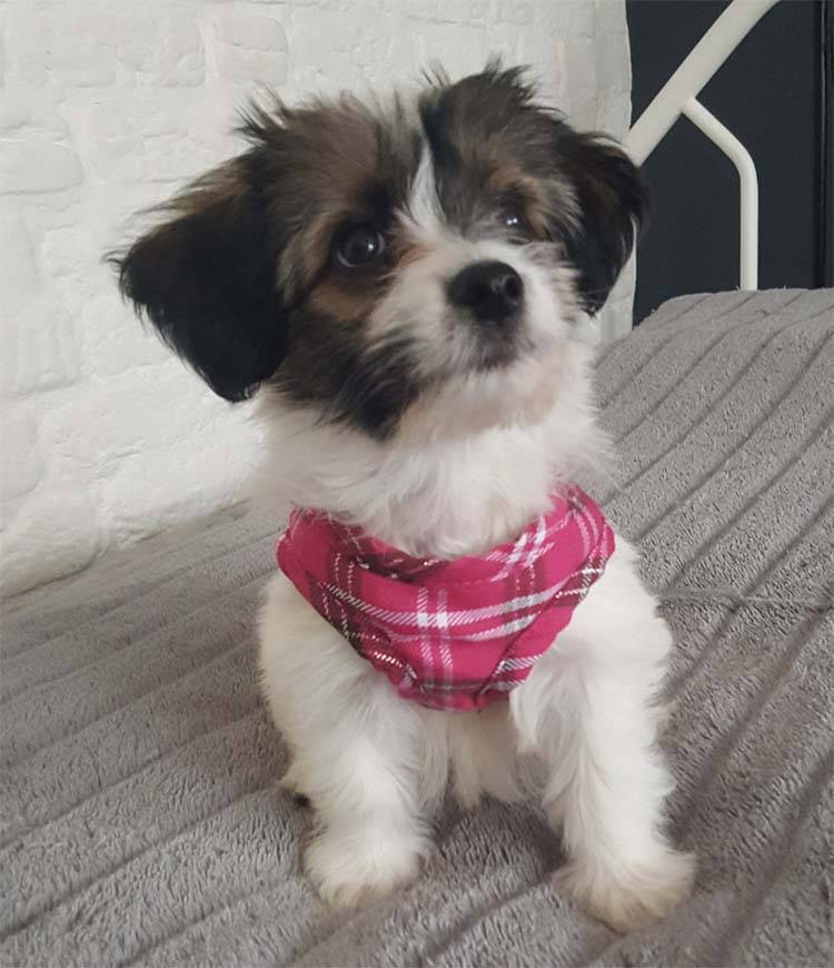 doxtasy comfy dog harness scottish hot pink petsonline. Black Bedroom Furniture Sets. Home Design Ideas