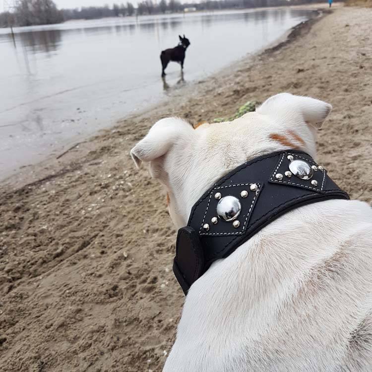 Doxtasy Dog Collar Ruff Chic Black Petsonline
