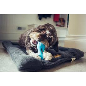 West Paw Design Dog Toy Zogoflex Qwizl Aqua