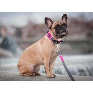 DOG Copenhagen Dog Collar Urban Explorer Wild Rose