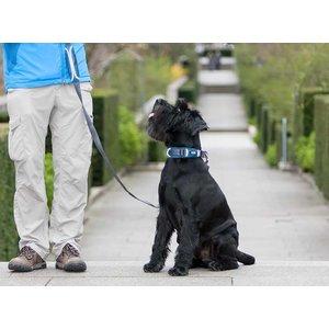 DOG Copenhagen Dog Collar Urban Explorer Ocean Blue