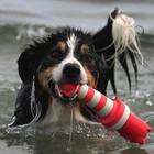 Rogz Dog Toy Lighthouse