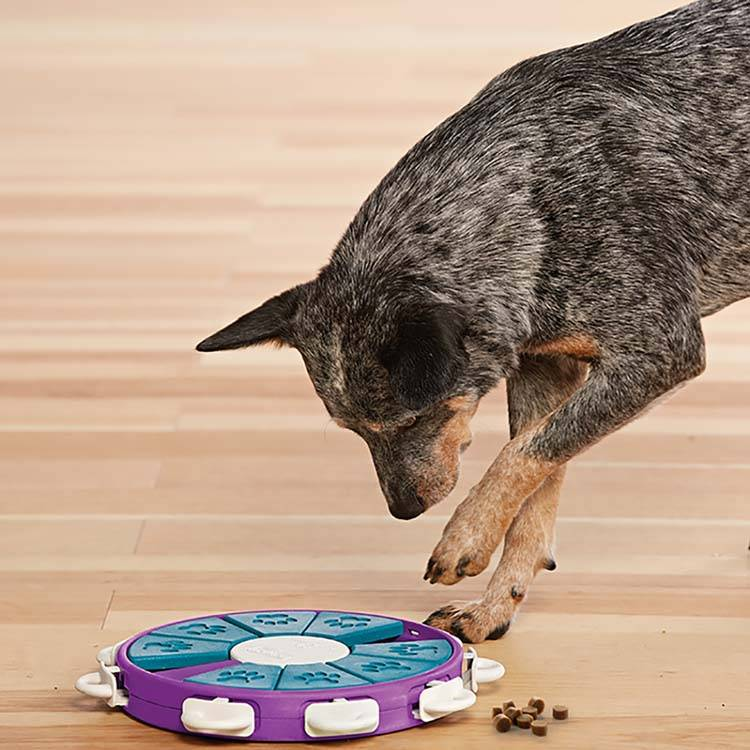 Hondenpuzzel Dog Twister