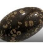 Houten parel olive - 30mm - bois brun confetti