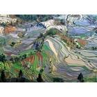 Landschaften-Reisterrassen