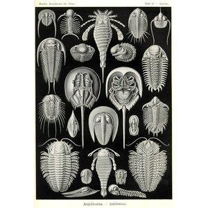 Aspidonia - Schildtiere