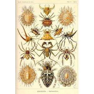 Arachnida - Spinnentiere