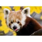 Kleiner Panda 1484