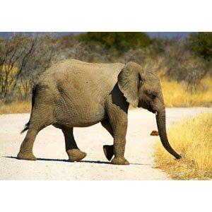 Elefant 1423