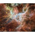 Tarantula_Nebula_-_Hubble von ESA-NASA, ESO and Danny LaCrue
