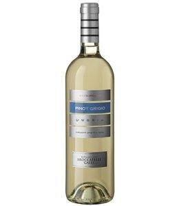 Antigniano Pinot Grigio IGT - Antigniano