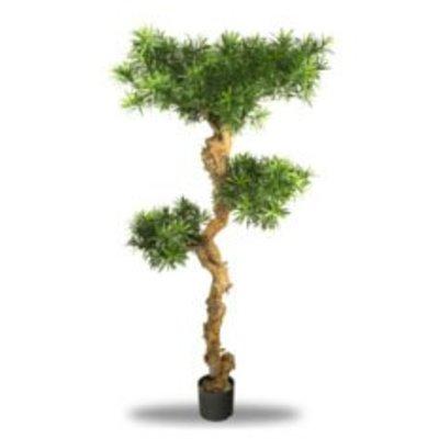 Kunst Podocarpus