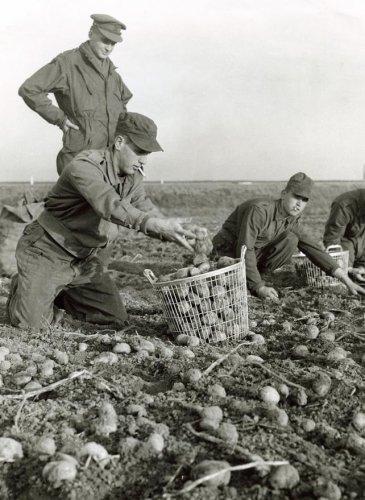 Zinken Draadmand Geschiedenis - Aardappelmand / Oogstmand