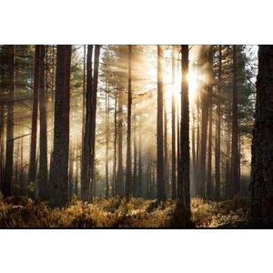 Mural Wald Sonnenaufgang