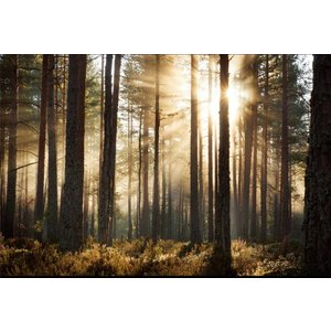 Photo wallpaper Forest sunrise