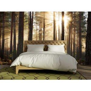 Mural Forest sunrise