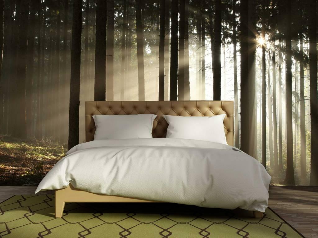 Fotobehang In Slaapkamer : Zelfklevend fotobehang bos zonsopgang walldesign