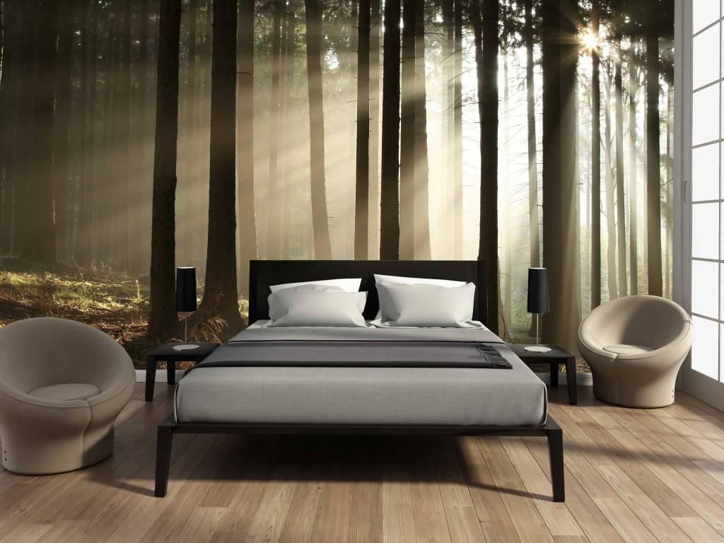 Fotobehang Bos zonsopgang 2 - Walldesign56.com