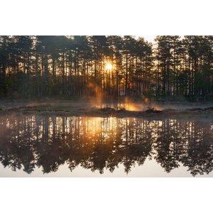 Fotobehang Bos zonsondergang