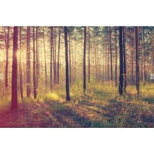 Mural Wald Sonnenuntergang - Herbst