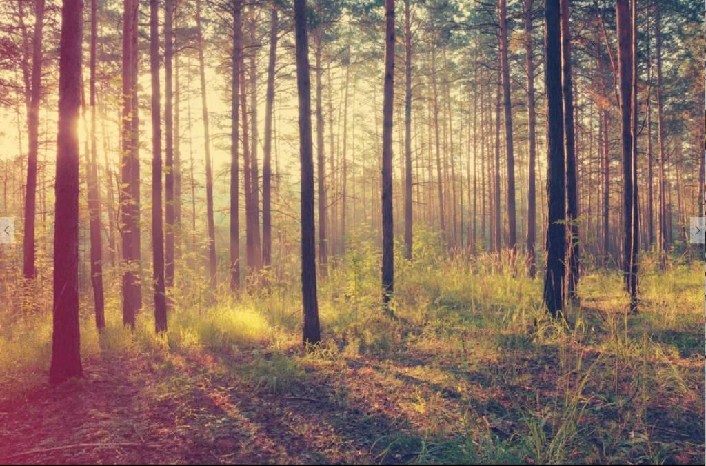 Fotobehang Bos Slaapkamer : ... van rust met dit prachtige fotobehang ...