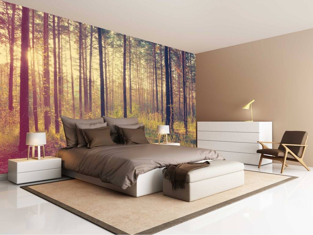 fotobehang bos zonsondergang herfst. Black Bedroom Furniture Sets. Home Design Ideas