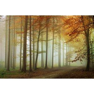 Fotobehang Bos zonsondergang - Herfst 2