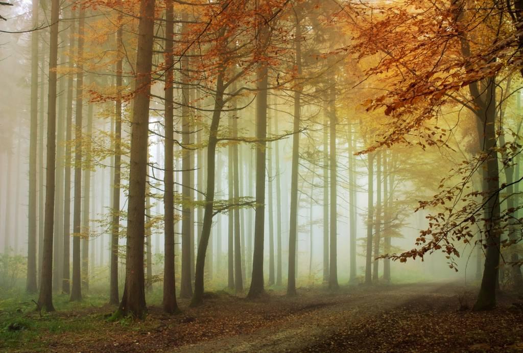 Mural Wald Sonnenuntergang Herbst 2 Walldesign56