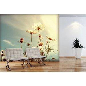 Mural Cosmos Flower 3