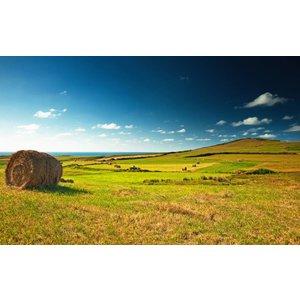 Fotobehang Green Fields