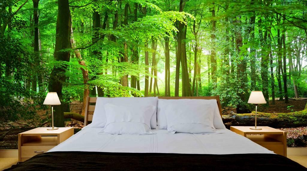 zelfklevend fotobehang bos zonsopgang 4 - Behang Bos