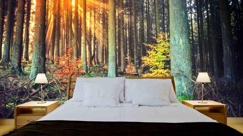 Mural forest autumn walldesign56 wall decals murals for Autumn forest wallpaper mural