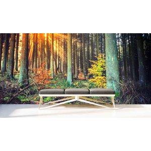Mural Wald Herbst