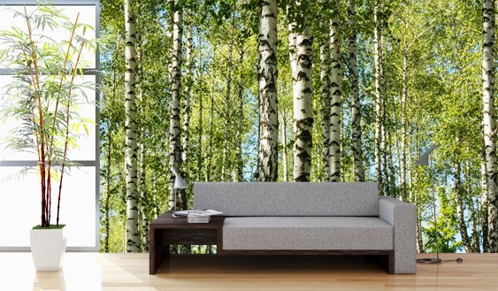 Mural forest birch trees walldesign56 wall decals for Birch tree forest wall mural