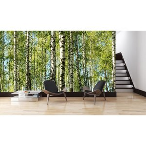 Mural Forest Birch Trees