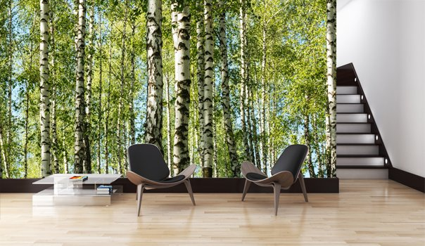 Mural forest birch trees walldesign56 wall decals for Birch tree mural