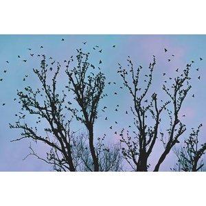Foliage Fototapete Vögel