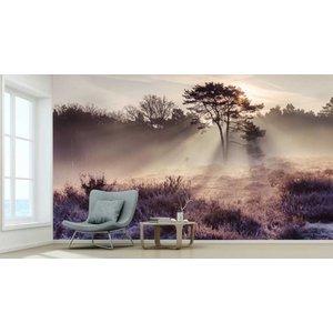 Photo Wallpaper Cutting Mist