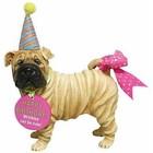 Westland (Happy Birthday) Sharpei (Happy Birthday)