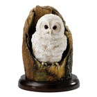 Country Artists Tawny Owlet