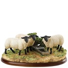 Border Fine Arts Suffolk Sheep