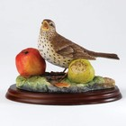 Border Fine Arts Song Thrush (Zanglijster)