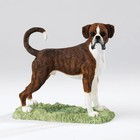 Border Fine Arts Boxer (Brindle & White)