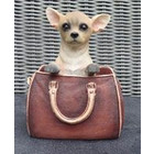 Leonardo Collection Chihuahua in Handbag