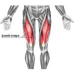 Quadriceps blessure