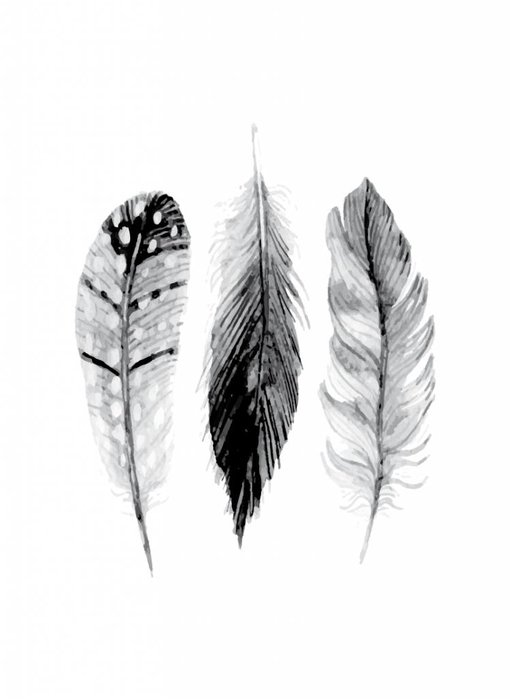 Woon-/Wenskaart Feathers