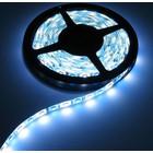 RGB W LED Strip 60/LED pm WP