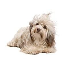 Fatzzo TT Hundeshampoo & Spülung 2x250ml