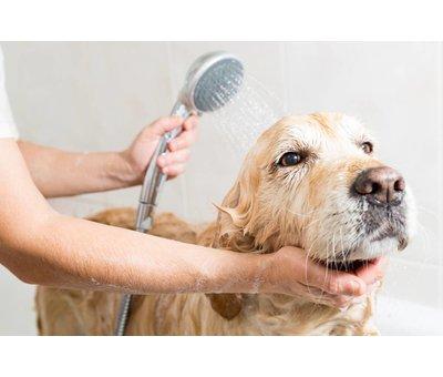 Fatzzo TT Hundespülung Samt weiß 5 Liter