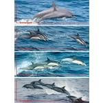 Leeswijzer Dolfijnen